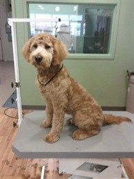 Dog gone cute pet grooming clipping washing in brampton ontario location solutioingenieria Gallery