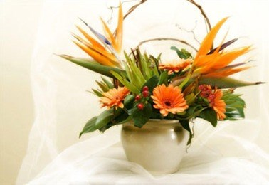 Exotic Flowers Gifts Florists Retail In Mississauga Ontario