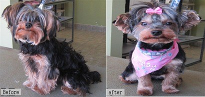 Amazing pet grooming formerly paws spa pet grooming pet grooming 1 10 solutioingenieria Images