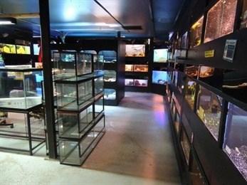 Petland Pet-Shops in St Catharines Ontario | NiagaraThisWeek com