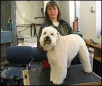 Tlc dog grooming pet grooming clipping washing in hamilton ontario 1 3 solutioingenieria Gallery