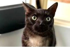 Pets up for adoption in Toronto | Toronto com