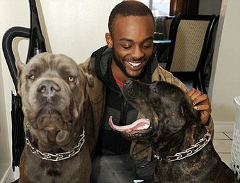 Cane corso owner pleads guilty in Lisgar dog attacks ...