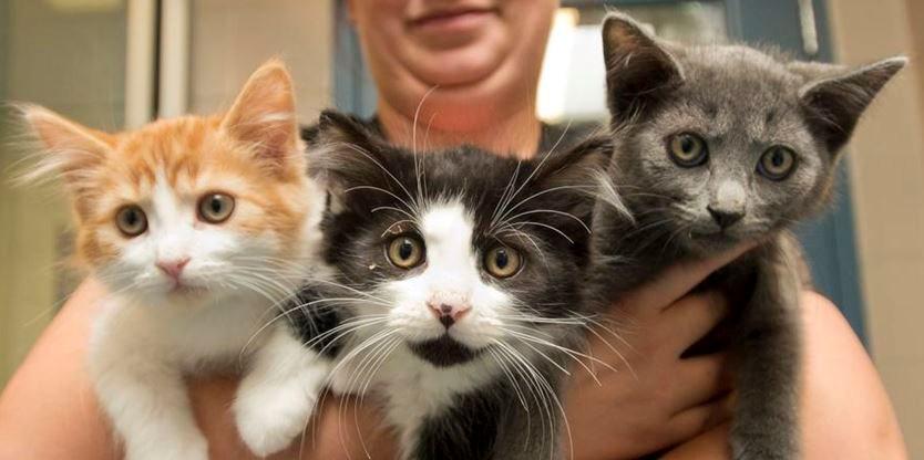 Kitchener humane society drops cat adoption fee as shelter