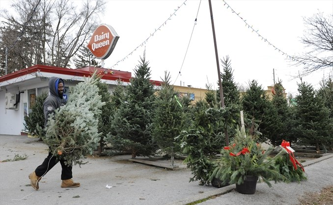Christmas Tree Shortage.There S A Christmas Tree Shortage In Parts Of The Gta But Not