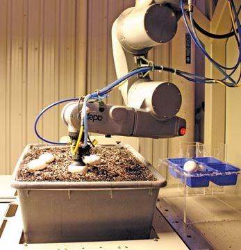 Automated Mushroom Greenhouse