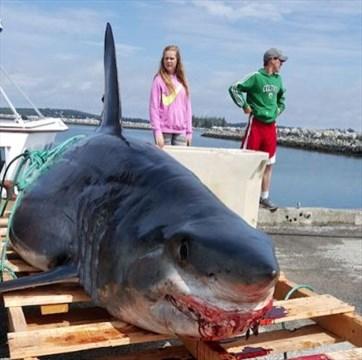 Hidden Unseen: Sharks Are Jawsome! |Worlds Largest Bull Shark