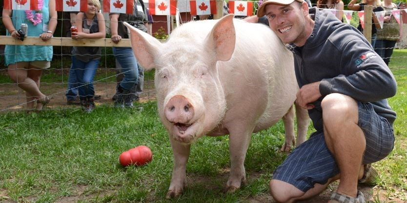 Esther the Wonder Pig could soon have her own reality TV show