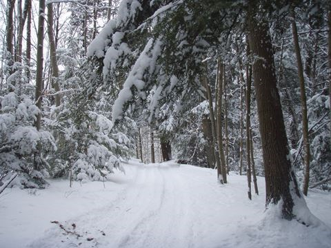 Bruce Trail Halton Hills Chapter Hike On November - 6 scenic hikes in halton hills