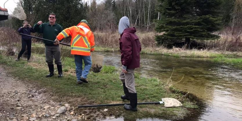 Ontario releases 5,000 brook trout in Dufferin County: Here