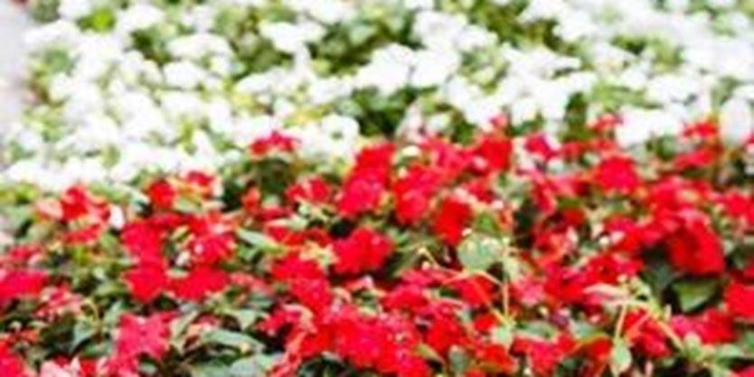 Opinion gardening for celebrating canada 39 s 150th for Garden design ideas canada
