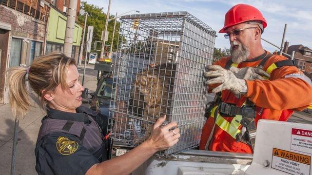 Cat Rescue Burlington Ontario