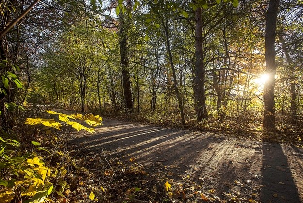 Looking to get your hiking fix? Check out these 5 York Region