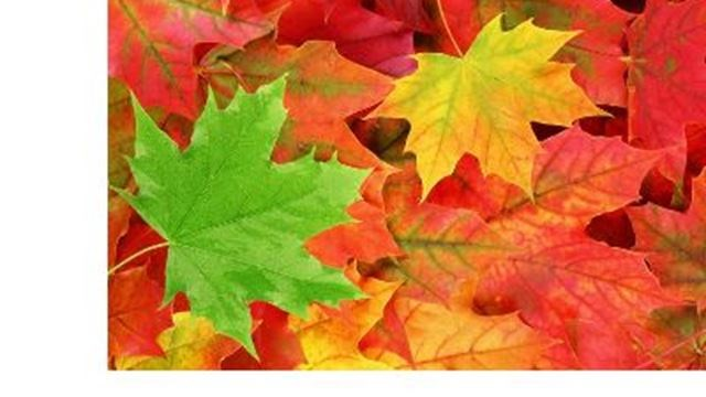 Fall Festival at Terra Cotta Conservation Area