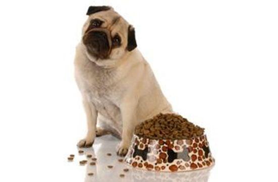 Raw Dog Food Regina