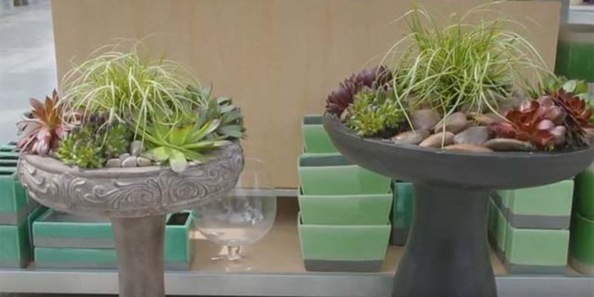 Diy Succulent Bird Bath Planter With Terra Greenhouses Thespec Com