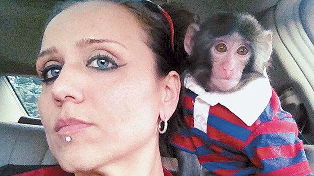 Return Ikea monkey Darwin, says Scarborough owner | InsideToronto.com