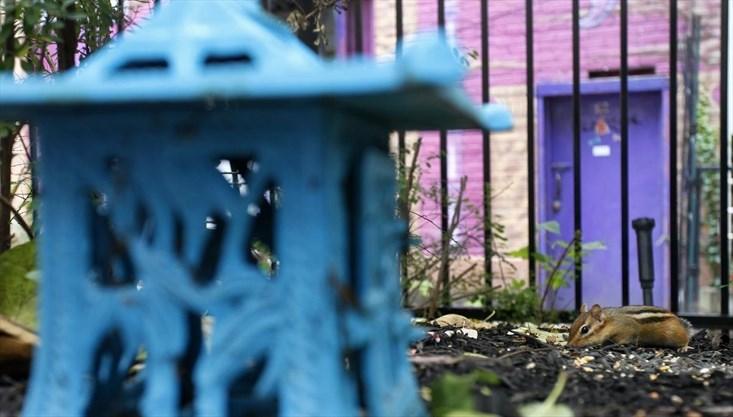 PE_urban-oasis015