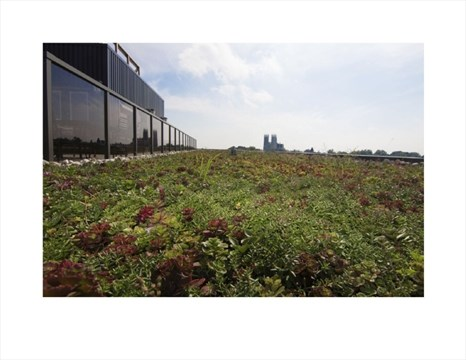 Guelph business growing vegetated roofing guelphmercury smart green roof at skyline reheart Image collections