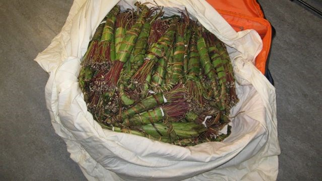 The khat's out of the bag | Mississauga com
