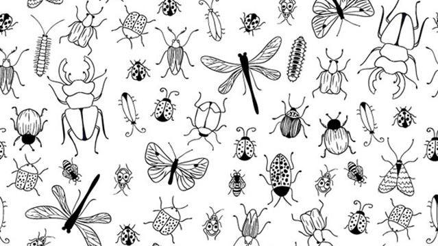 Top 9 creepiest bugs in Ontario | OurWindsor ca