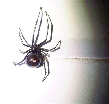 the beauty of the black widow Enter your mobile number or email address below and we'll send you a link to download the free kindle app then you can start reading kindle books on your smartphone, tablet, or computer - no kindle device required.