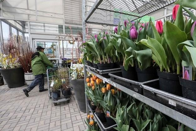 Garden Centre Operators Upset As Covid