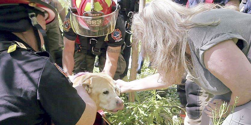 Scarborough Bluffs Dog Rescue