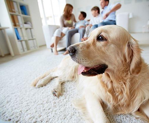 2b07e5c21 Having a family pet can strengthen family bonds