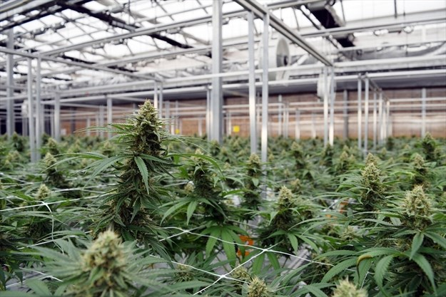 Minto approves industrial land sale to cannabis producer | Toronto.com