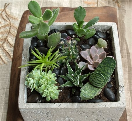 Kathy Renwald Be Stingy With Succulents Thespec Com