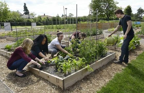 Mohawk Community Gardens Grow Unconventional Gardeners