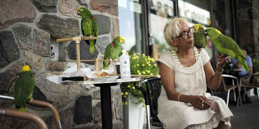 Parrots are regulars at North York coffee shop | Toronto com