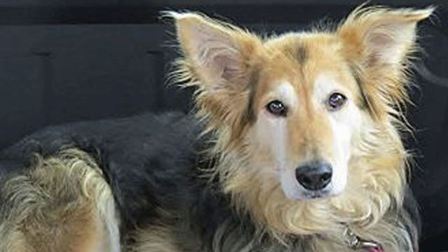 rescue dogs in desperate need of foster homes