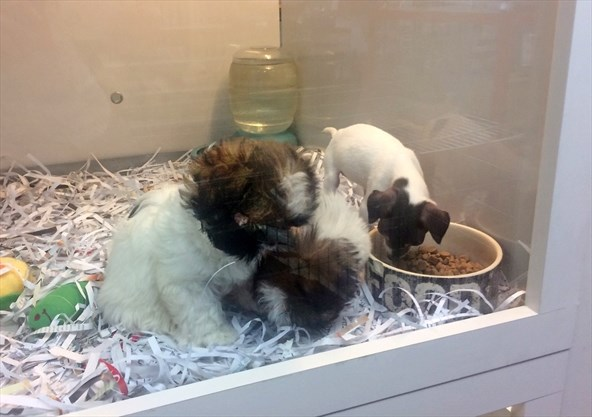 Newmarket petition launched to stop animal sales in pet stores