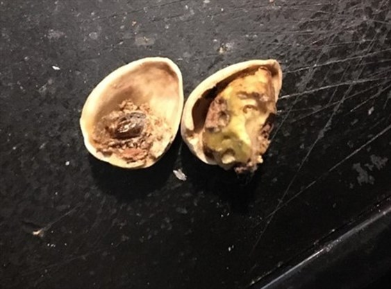 bolton man finds bugs in walmart and costco pistachios