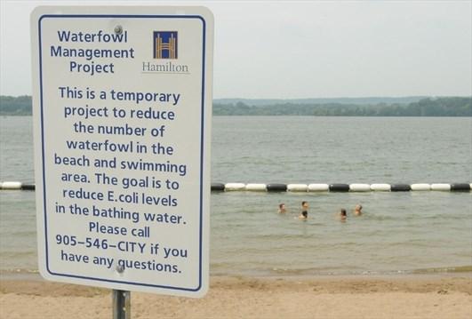 E  coli tests heading to the beach?   Toronto com