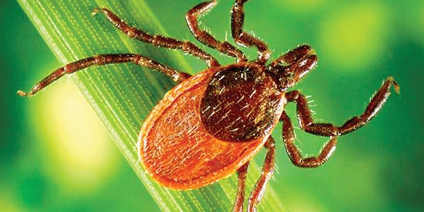 Lyme disease cases on the rise in Durham Region