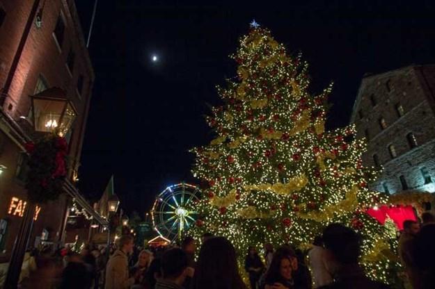 9 Tree Lightings And Holiday Lights