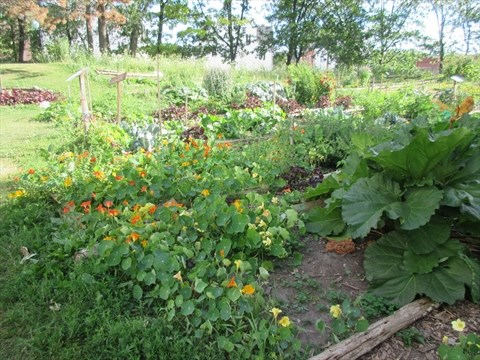 CAMH patients get horticulture therapy through Sunshine Market ...