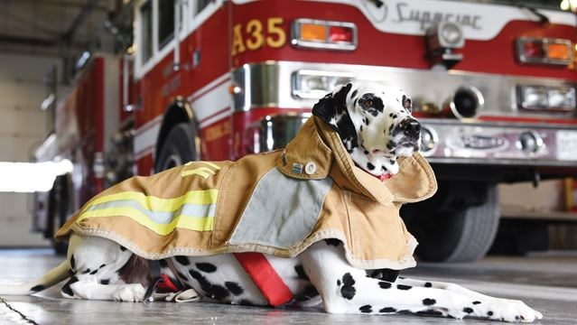 Firehouse Dog Hot Dogs