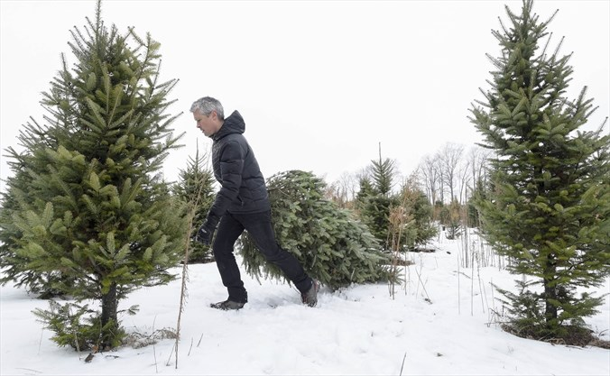 Cut Your Own Christmas Tree Near Me.5 Places To Cut Your Own Christmas Tree Around Guelph