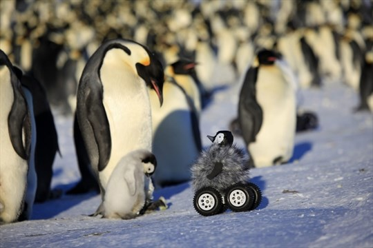 March of the robot penguin | TheSpec com