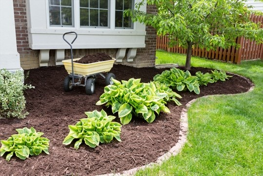 Five eco-friendly ways to maintain your garden | TheSpec com
