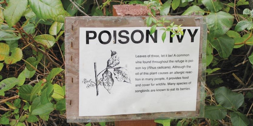5 poisonous plants of southern ontario you should avoid. Black Bedroom Furniture Sets. Home Design Ideas