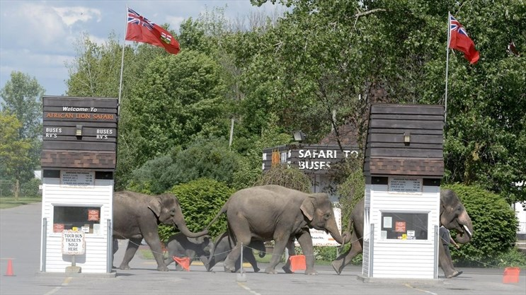 African Lion Safari offers up-close experiences with animals