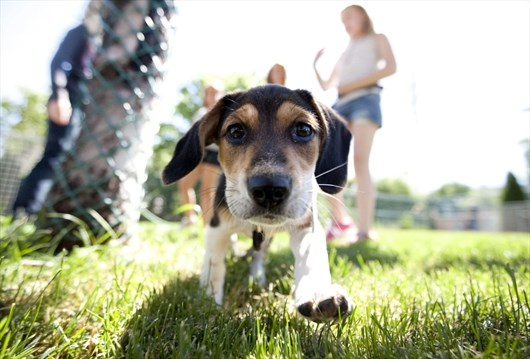 Animal Lover Heavensummer Sessions Give Kids Lessons In Pet Training And Medicine Hamiltonnews Com