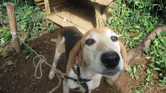 Dog Bylaws Burlington Ontario