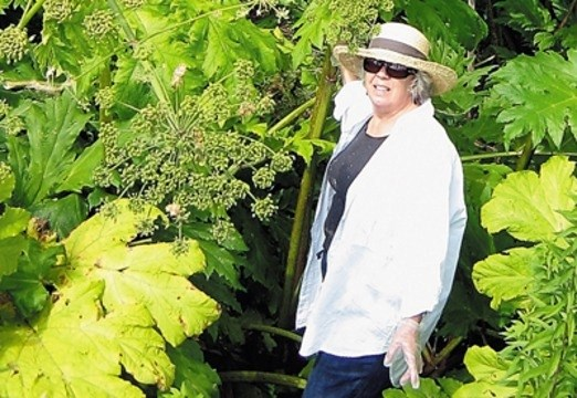 Deirdre Kavanagh With Giant Hogweed Before She Was Poisoned Last Summer