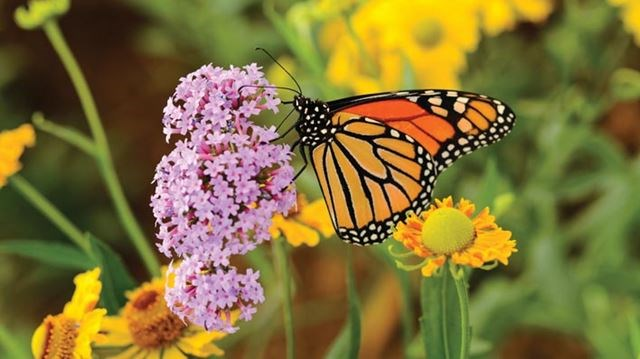 How To Plant A Butterfly Garden Yorkregion Com
